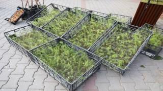 Dağ yöresine nitelikli tarım desteği