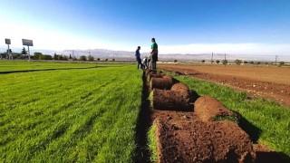 """Özer, """"Dışa bağımlılıktan kurtulduk, güzel ve sağlam rulo çimler üretiyoruz"""""""