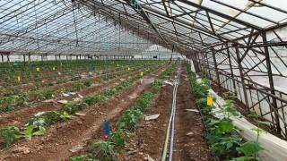 Tarım Krediden afetten zarar gören çiftçilere destek