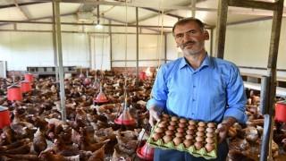 Yarka tavukları üreticinin umudu oldu