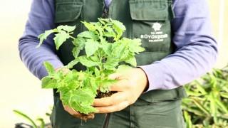 Aydın Büyükşehir Belediyesi Ata Tohumlarını bu yıl da toprakla buluşturdu