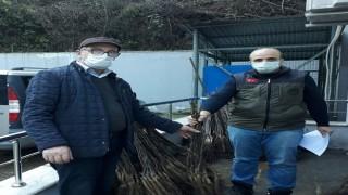 Giresun'da Çiftçilere Sertifikalı Meyve Fidanı Dağıtıldı