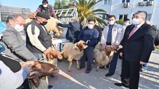"""""""Koyun ve Keçilerde Verimliliği Artırma Projesi"""" Kapsamında 70 Yetiştiriciye Koç Dağıtımı Yapıldı"""