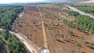 Safranbolu'da 100 Bin Fidan Toprakla Buluşturuldu