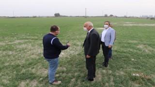 Söke Belediyesi buğday üretip, elde edilen unu vatandaşına dağıtacak