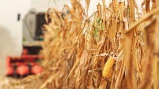 Sözleşmeli tarımda TARIM KREDİ ve TÜRİB işbirliği