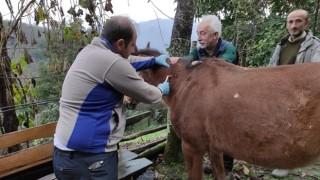 Tek Tırnaklı Hayvanlar Kayıt Altına Alınıyor