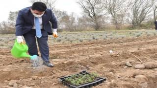 Altıeylül Belediyesi tıbbi ve aromatik bitkiler yetiştiriyor