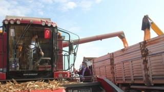 Bakan Pakdemirli TİGEM Ceylanpınar Tarım İşletmelerinde Mısır Hasadı Ve Buğday Ekimi Yaptı