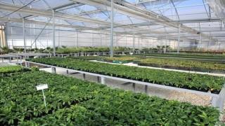 Hem elektrik hem çiçek üreten tesis