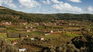 Köylüler Asırlık Zeytin Ağaçlarını Korumak İçin Dava Açtı
