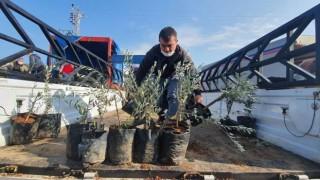 Mersin Büyükşehir'den Kaliteli Ürün İçin Çiftçilere Kaliteli Fidan Desteği