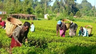 Türkiye, Nijer'de 1 milyon hektarda tarım yapacak