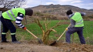 Aliağa Belediyesi'nden Çıtak Mahallesi'ne 600 Nar Ağacı