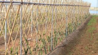 Atay'dan Efeler tarımına yeni soluk