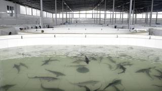 Balıkçılık ve su ürünleri endüstrisinin durumu hakkında bilgilendirme toplantıları Kazakistan'la devam ediyor