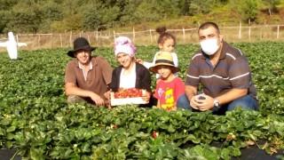 Çilek Projeleri İle Çiftçinin Yüzü Gülüyor
