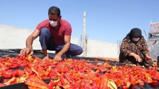 FAO projesinde yüzde 48 istihdam başarısı