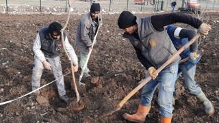 Keçiören Belediyesi 17 dönümlük meyve bahçesi kuruyor