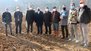 Kocadere-Şenköy Havzasında Tarım Arazileri Kiviyle Dolacak