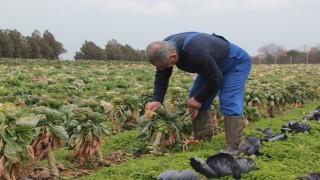Kullandıkları pestisitlerden zehirlenen çiftçilerin ve tarım işçilerinin sayısı dünya genelinde son 30 yılda yaklaşık 15 kat arttı.