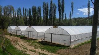 Orman Köylüsüne 250 milyon TL destek
