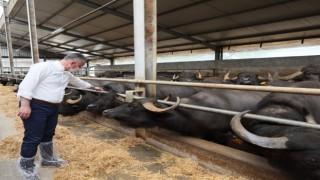 Tarım ve hayvancılıkta 2020 yılı farkı