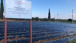 TİKA'dan Suriye'nin Kuzeyinde Tarıma Destek