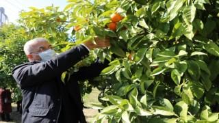 Turunçlar salata sosu olarak ekonomiye kazandırılacak