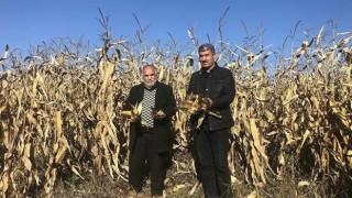 Uzmanlar, mısır fiyatındaki artıştan endişeli