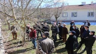 Akseki'de çiftçiye budama eğitimi verildi