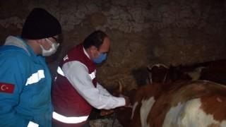 Bayburt'ta İlkbahar Dönemi Şap Aşılaması Kampanyası Başladı