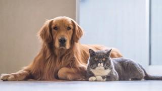 Sahipli Kedi Ve Köpeklerin Kimliklendirilmesi Zorunlu Olacak