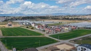 Muratpaşa, 20 bin kilogram buğday hasat edecek