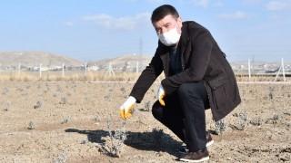 Başkan Dinçer ''Şehrimize Yeni Bir Doğal Yaşam Alanı Kazandırıyoruz''