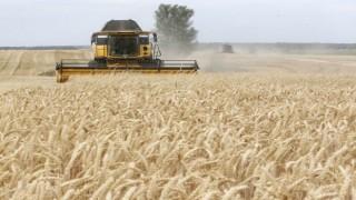 Buğday pas hastalıklarına karşı bölgesel işbirliğini güçlendirecek yeni adım