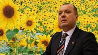 CHP Tekirdağ Vekili Aygun'dan AKP'ye Ayçiçeği İsyanı