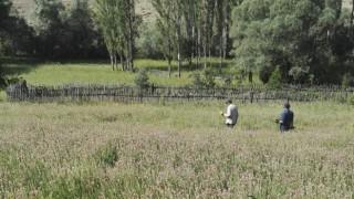 Giresun'da Yetiştiricilere Yüzde 50 Hibeli Yem Bitkisi Tohumu