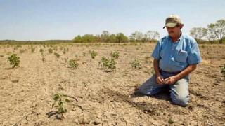"""Gürer: """"Tarımsal kuraklık halen bazı bölgelerde ciddi risk"""""""