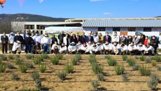 Muğla'da Çam Balı Üreticisine Büyük Destek