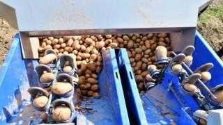 Samsun Büyükşehir Belediyesinden üreticiye patates tohumu desteği