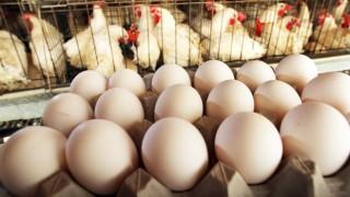 Tavuk Yumurtası Üretimi Yüzde 7,3, Tavuk Eti Üretimi Yüzde 8,2 Azaldı