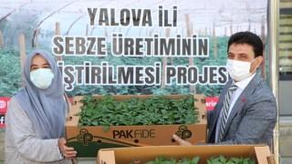 Yalova Tarım Ve Orman Müdürlüğü Çiftçilere 60 Bin Biber Fidesi Dağıttı