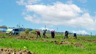 3 bin 500 meyve ağacı toprakla buluşturuldu