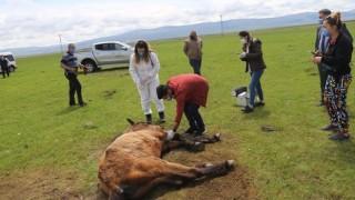 Ayağı kırılan atın imdadına Tarım Ve Orman Bakanlığı yetkilileri yetişti