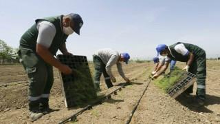 Aydın Belediyesi Çiftçilere Dağıtılacak Kuşkonmazların Dikimini Yaptı