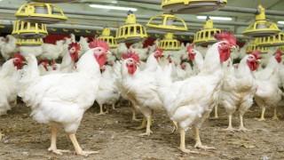 """""""Beyaz et sektörü çalışanlarıyız ve üretiminden gurur duyuyoruz"""""""
