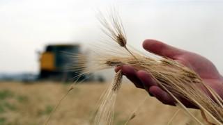 Çiftçi-Sen: Hububatta Referans Fiyatı Yeniden Belirlenmelidir!