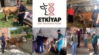"""Giresun'da Suni Tohumlama Projesi """"ETKİYAP"""" Başladı"""