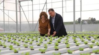 Hatay Büyükşehir'in Topraksız Tarımı Meyvelerini Vermeye Başladı